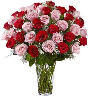 Premium Red and Pink Roses