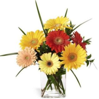 "Happinessâ""¢ Gerbera"