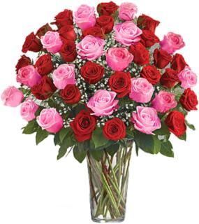 48 Premium Red and Pink Roses